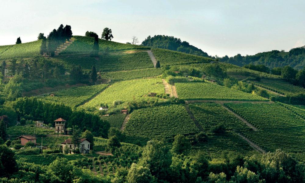 The comeback of white wines
